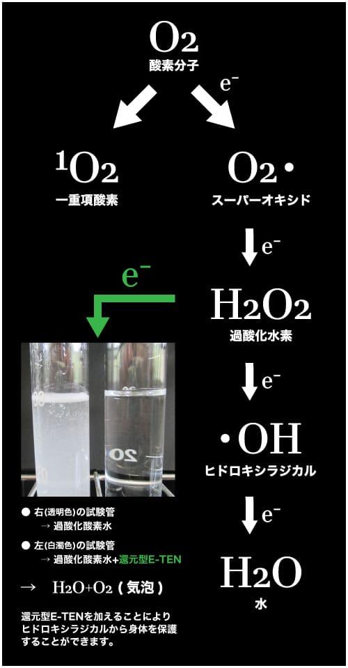 還元型E-TENの活性酸素の代謝の仕組み図