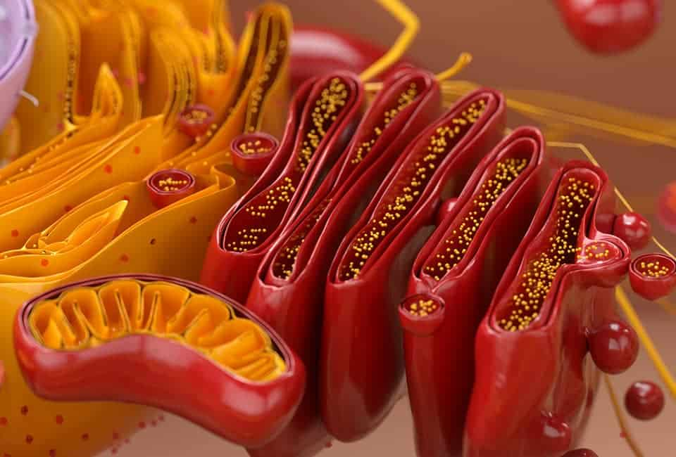 ミトコンドリアの活性化に必要なサプリメントの成分