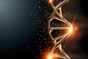 サーチュイン遺伝子