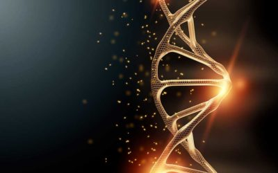サーチュイン遺伝子と若返りの関係