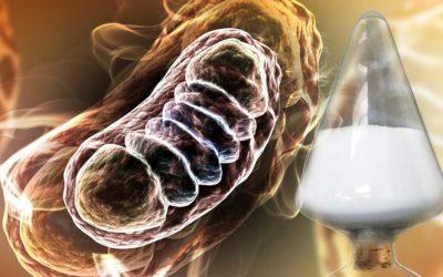 ミトコンドリアの活性化と還元型E-TENの関係