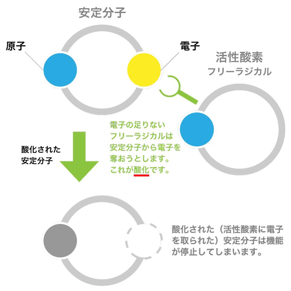 酸化作用とフリーラジカルの関係図